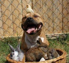 15 foto che ti faranno cambiare idea sui pitbull. #dogs #animals