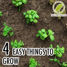 4 easy things to grow