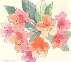 """""""Rhododendron"""" Watercolor and Pencil Susan Lally-Chiu http://www.lally-chiu.com"""