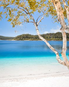 The blue waters of Lake Mckenzie on K'gari (Fraser Island) Queensland Australia (OC) get your photography kit now # affiliate Fraser Island Australia, Coast Australia, Queensland Australia, Melbourne Australia, Australia Travel, Brisbane, Perth, Sydney, Cairns