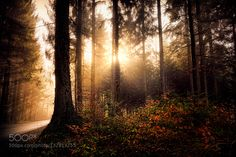 Morning light by franzengels. @go4fotos