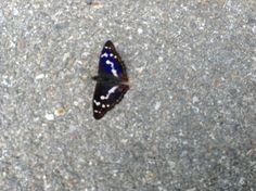 A Mezzacca una farfalla si è fermata a pensare sulla strada.....