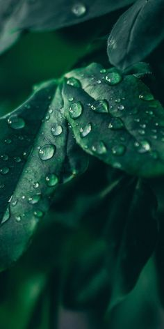 Hd Flower Wallpaper, Green Leaf Wallpaper, Nature Wallpaper, Mobile Wallpaper, Wallpaper Backgrounds, Wallpapper Iphone, Dark Green Aesthetic, Leaf Photography, Close Up Photography