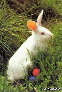 Húsvéti nyuszi Animals, Animales, Animaux, Animal, Animais