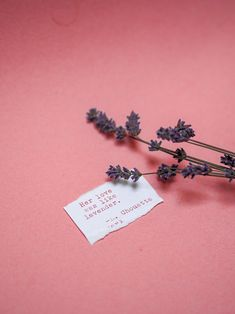 Dried lavender and sweet quote