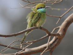 Abohar Wildlife Sanctuary - in Punjab, India