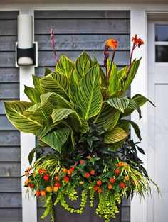 Celebrate hot weather with the bold, graphic foliage of plants from the tropics. Try one of our nine favorite tropical container combinations, or create your own. Wooden Planters With Trellis, Tall Outdoor Planters, Patio Planters, Tall Plants, Foliage Plants, Large Plants, Tropical Landscaping, Tropical Garden, Tropical Plants