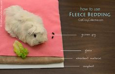 How to layer fleece bedding. This would be so helpful if you are a new guinea pig owner and a old one too because if you stuck with a pet store beddding, which some are perfectly safe to use, but fleece is just a tad bit easier to handle, especially when you are cleaning out the cage!!!!!!!!!!!!