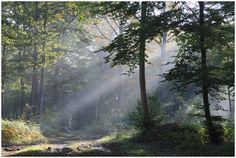 Morgonens solstrålar