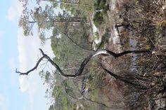 partal burned tree