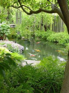 koi pond beautiful and natural