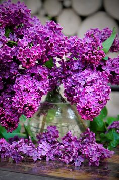 1719 Best Lavender Lilacs Wisteria And Other Purple Flowers