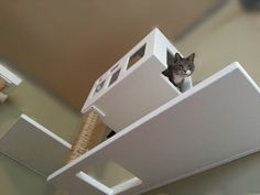 13 Cat-Approved Gifts for Fabulous Felines (And Their Humans) | Posh System Floors are for you human peons. The Posh System is a six-piece modular wall mounted system that lets me roam high above the ground. You can pick and choose which pieces fit your needs and budget (Hint: all of them).  Off the Wall Pet  | WIRED.com