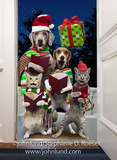 Funny Christmas Pictures Animals Holidays 42 Ideas For 2019 Christmas Animals, Christmas Cats, Christmas Humor, Merry Christmas, Funny Christmas Pictures, Funny Christmas Gifts, Christmas Images, Funny Cats And Dogs, Funny Animals