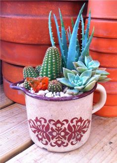 Beautiful succulents in tin cup