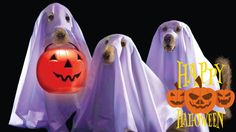 funny halloween hd wallpaper is an HD wallpaper posted in Funny category. You ca… - Halloween Wallpaper Halloween Pictures, Halloween 2015, Halloween Ghosts, Happy Halloween, Halloween Costumes, Halloween Ideas, Halloween Cartoons, Halloween Stuff, Ghost Dog