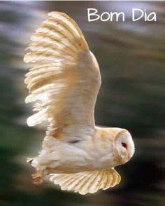 Alce seu voo