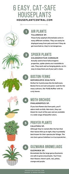 Which #houseplants can safely be grown in a home that also contains furry inhabitants? Actually, you've got quite a few options! #indoorplants #indoorgarden #pets Indoor Flowering Plants, Outdoor Plants, Air Plants, Plants Online, Indoor Gardening, Organic Gardening, Chain Of Hearts Plant, Cat Safe Plants