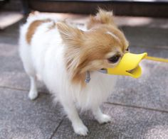 Duckface Dog Muzzle - http://www.FancyGiving.com