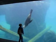 A Sea Lion and Little Boy with Asperger's Make a Special Connection at an Aquarium