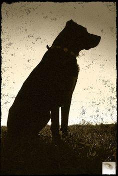 dog, hund, animal, tier, negro
