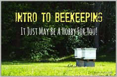 Want to learn how to keep bees? There are several things to consider before jumping into beekeeping, so let's take a look and see if it's a hobby for you.