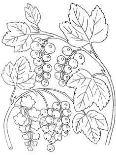 Pflanzen 6