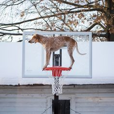 Maddie the Coonhound II / Theron Humphrey | Photographie