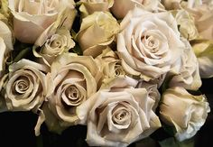 These would be perfect with the calla lilies in a bouquet for the wedding! Light Pink Flowers, Floral Flowers, Funeral Bouquet, Sahara Rose, Winston Flowers, Magical Wedding, Types Of Flowers, Rose Bouquet, Calla Lily