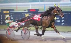 A Sulky Is Used In Harness Racing