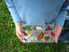 craft tray as nature item holder (idea only) via Our Ash Grove: unschooling