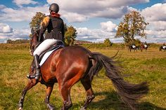 Could Hypnosis Help You Canter? by Dr Tracey Cole | Horsemart Confident, Community, Horses, Animals, Animais, Animales, Animaux, Animal, Horse