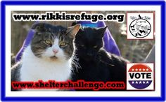 6/13/15 - Please VOTE & SHARE for RIKKI'S REFUGE in the Animal Rescue Site SHELTER CHALLENGE every day! Thank you! Vote here: http://www.shelterchallenge.com/web/charityusa/shelter-details?userId=53992&nomineeId=17448