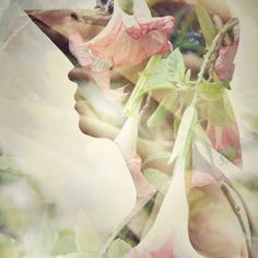 Glenys Jackson - The Last of Summer Blooms - Photograph on canvas $95