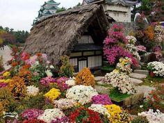 Casa com flores..muitas!!