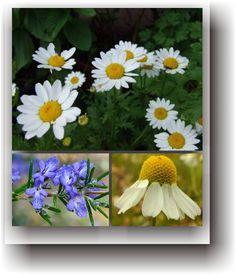 migrene Healing, Plant, Varicose Veins