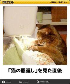 「猫の恩返し」を見た直後