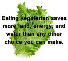 Vegetarian Lifestyle Health Benefits.