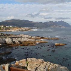 Stroll through the quaint seaside town of Hermanus and lunch on the Whale Watching and Wine Tour #ExploreSideways