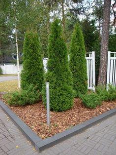 Havuistutus, puutarha, piha Home And Garden, Patio Garden, Outdoor Settings, Curb Appeal Garden, Urban Garden Design, Urban Garden, Garden Arch, Terrace Garden, Backyard Plan