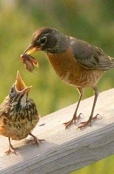 Momma feeding baby