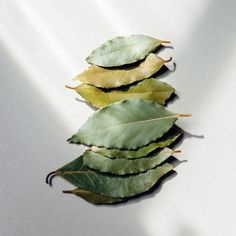 Our balsamic bay leaves have a sweet essense with nutmeg notes. They give an earthy, subtle aroma to stews, soups, sauces and many other home-cooked meals. Laurel Leaves, Bay Leaves, Plant Leaves, Homemade Spices, Growing Tree, Spice Mixes, Bright Green, Earthy, Greek