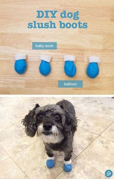 Create these easy DIY dog booties. Cut the top of the balloon off, place a baby sock inside the balloon and place them on your furry friends paws to keep out the salt!: Dog Sweaters, Dog Care, Diy Yorkie Clothes, Pet Clothes, Dog Clothing, Dog Grooming Tips, Pet Tips, Dog House Inside, Dog Socks