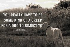 If your dog doesnt like someone you probably shouldnt either -Unknown #dogs #cats