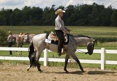 Western Pleasure   Horse Journals