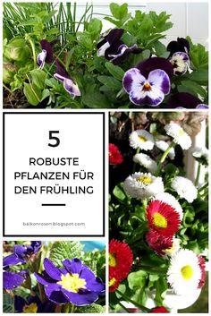 5 Balkonpflanzen für den Frühling, die leichten Frost vertragen Flower Boxes, Flowers, Balcony Furniture, Fairy Lights, Planters, Garden, Hummus, Bunt, Style