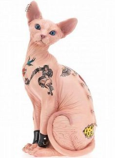 * Sphynx Tatts Cat * I don't like cats but if I get another one I would love it to be a sphynx, especially with tattoos!