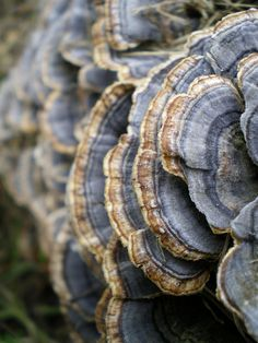 I love shelf fungus. we used to have some lovely large ones on our old Sycamore tree stump after we cut it down........b