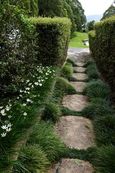 I like the Monkey Grass growing up both sides of the stone pathway.