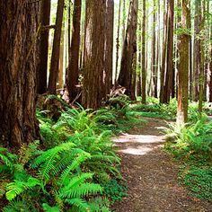 Visit the redwoods in Rockport, CA